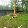 Tribune-Star/Jim Avelis<br /> Force of nature: Lightning struck a tree on the banks of Otter Creek in Mill Dam Park over the weekend. The force blew the bark and limbs off the tree, shattering the trunk.