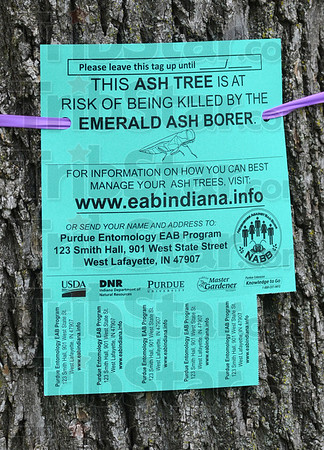 Tribune-Star/Jim Avelis<br /> Information available: Terre Haute urban forester Sheryle Dell has placed signs on ash trees in Collett Park, helping residents learn where they can obtain information on the Emerald Ash Borer.