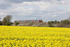 30 April 2012 :: A Cross Country voyager overlooking a field of flowering oil seed rape at South Moreton