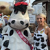 Moo-ving right along: 2012 Indiana State Fair Queen Erika Burghardt of Tippecanoe County announces the start of this year's fair as she stands with Buttercup the Cow Friday in Indianapolis. This year's state fair celebrates the dairy cow.