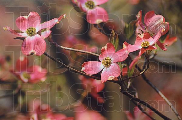 Spring's Eternal Promise by Marilyn Howerton
