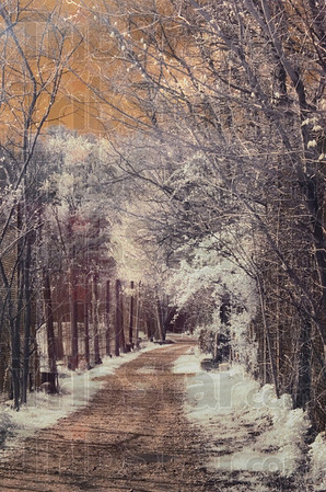 Path Pleasant by Kathy Donatoni