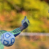 Tribune-Star/Jim Avelis<br /> Not this time: West Vigo goal keeper Nathan Augustus can't get to a ball headed by Terre Haute North's Nathan Paul-Bonham in first half action Tuesday night on the Viking's field.