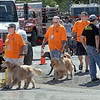 Search and Rescue: Several search and rescue K-9's walk among the huge crowd attending the annual National Night Out event at Fairbanks Park Tuesday evening.