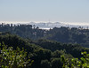 Tilden Park: view of San Francisco