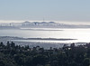 View of San Francisco from Berkeley Hills