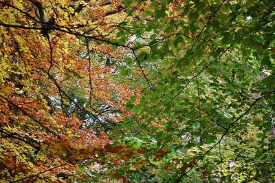 Brothy Woods - 25/10/2012