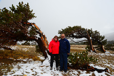 Windy Ridge Bristlecone Pine Scenic Area