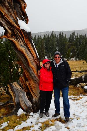 Windy Ridge Bristlecone Pine Scenic Area