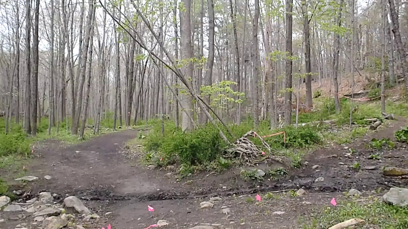 Coming out of Pine Forest - 2012 Loop Video - David Gordon