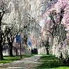Spring 2012-1522.jpg