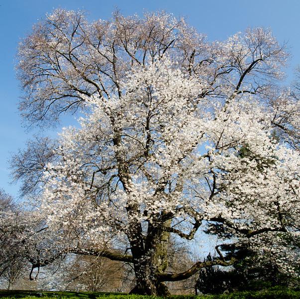 Spring 2012-1532.jpg