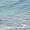 Coronado beach birds
