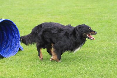 KC Delft Dag van de Hond 20-05-2012