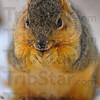 MET122112dobb'ssquirrel