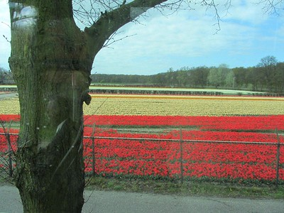 Flemish Landscapes 2012 - Livia McCarthy