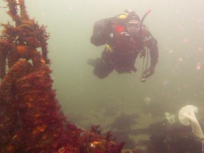 Diver Carl