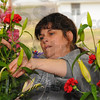 Tribune-Star/Jim Avelis<br /> Designing woman: Cowan & Cook designer Danielle Woods sets flowers in a vase, getting arrangements ready for Valentine's Day.