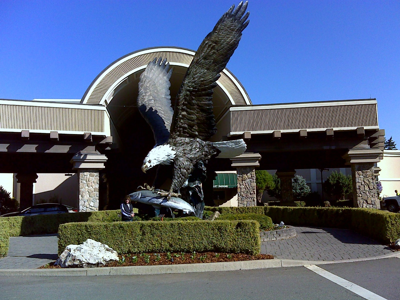 This bald eagle in front of the Seven Feathers casino was very impressive up close!