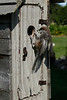 A time-lapse rig in front of a bird feeder captured these shots of the routines of avian parenting.