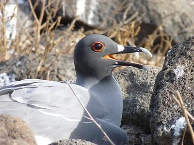 Galapagos Adventure - Leonid Kruglyak