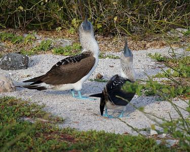 Galapagos Adventure - Gay and Roy Crawford
