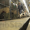 Tribune-Star/Jim Avelis<br /> Fixer-upper: Humane shelter employee Tim Anderson walks one of the shelter dogs down the main corridor Thursday afternoon. There are preliminary plans for a joining of forces between the shelter and Ivy Tech Communnity College of the Wabash Valley.