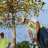 Tribune-Star/Joseph C. Garza<br /> A drink for the shade: Dan DeBard of the City Engineer's Office waters one of the trees along Ohio Boulevard Thursday afternoon as fellow employee Mike Curtis looks on.