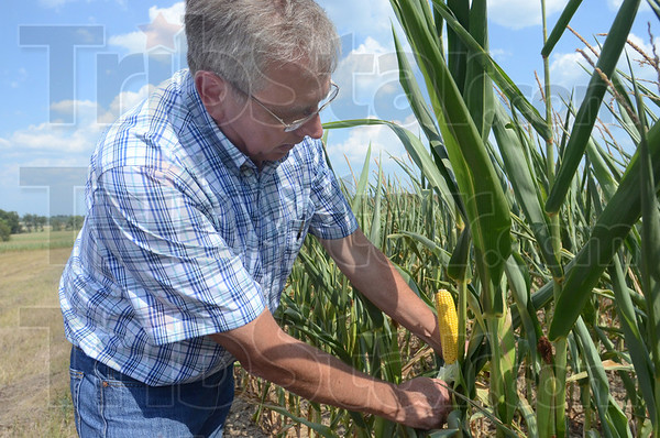 Tribune-Star/Jim Avelis<br /> Exceptions: Vigo County farmer Phil Carter displays an ear of corn on the edge of one of his fields. He said along the edges there were a few ears like this but just a few rows in there was little to no pollination.