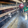 Grain dust: Mike Pruitt (R) creates a cloud of dust from the feeding of cattle at Hayhurst Farms Monday afternoon.