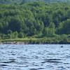 Moose on Little Cauchon Lake