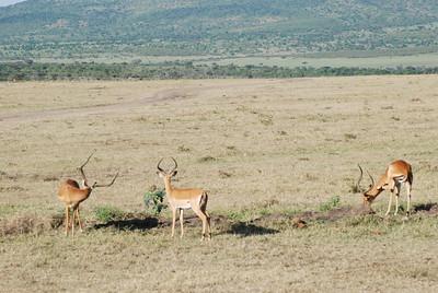 Kenya stora kameran 2