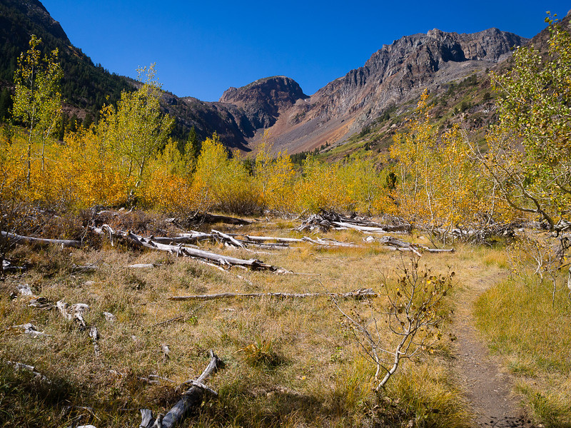 Aspens up the canyon