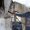 Meet and greet: Melyssa Minnick works with a horse at the Peacefield rescue ranch.