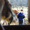 Watching: A horse looks out the stall door as Tammy Pogue works with an Arabian horse Saturday afternoon at the Peacefield rescue.