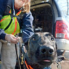 Sniff test:  Lillian Hardy is about to put her dog named Viper through a search and rescue training exercise in Jasonville Saturday morning.