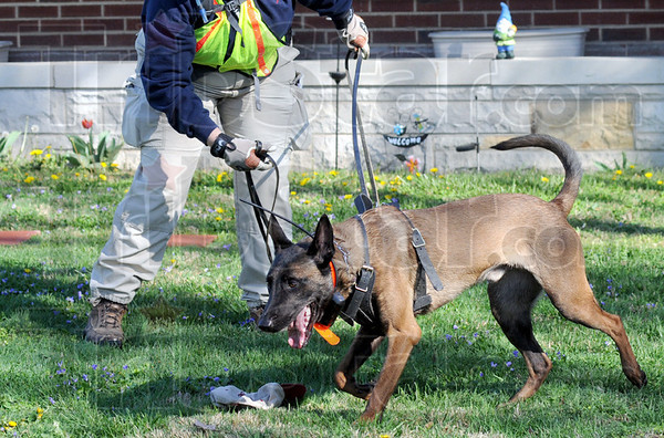 Scent: Lillian Hardy works with her dog during Saturday's search and rescue training exercise in Jasonville. The dog is getting the scent from the hat lying on the ground.