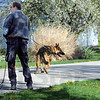 Search team: Porter County search team Jay Craig and his K-9 partner named Harley work a trail during Saturday's training exercise in Jasonville.