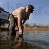 Temperature check: Jim Luttrell, manager of the Driftwood State Fish Hatchery, checks the temperature of the water in the pond at the Maple Avenue Nature Park before stocking it with rainbow trout Tuesday.