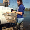 Test trout: Ashley Isaacs, a job shadow from Brownstown High School, prepares to place a net of rainbow trout into the pond at the Maple Avenue Nature Park Tuesday with the DNR's Jim Luttrell keeping en eye on the restocking of the pond.