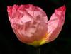 201203c 0635 sRGB