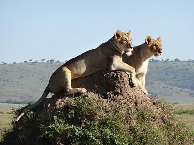Best of Africa 2012
