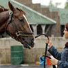 Hot walker Yolanda Cardoza holds Kentucky Derby entrant Dullahan after it's morning workout at Churchill Downs Tuesday, May 1, 2012, in Louisville, Ky. (AP Photo/Charlie Riedel)