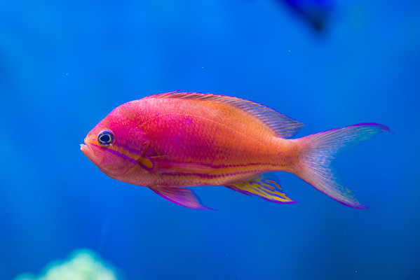 These are the fish I see in Hawaii