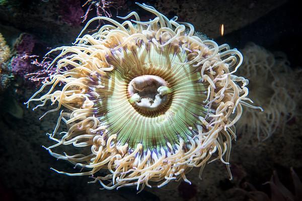 Sea anenomie!