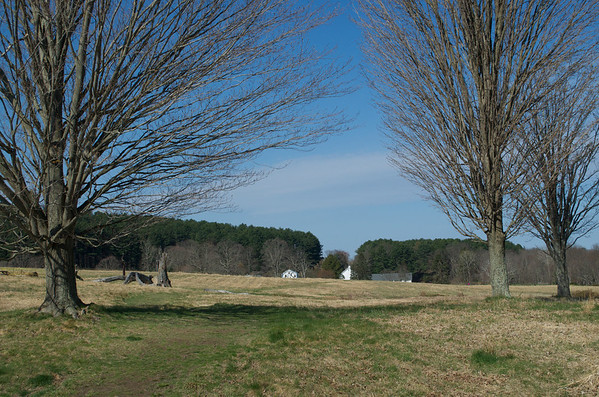 New Meadow Oak Tree Planting