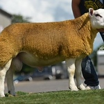 Milestonehill Toploader sold for 3100gns