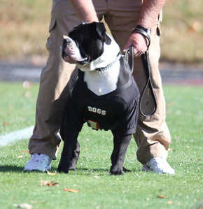 GWU bulldog prepares to run onto the field as GWU faces Coastal Carolina