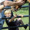 Feeding: Three-year-old Linton resident Tristan Bedwell feeds a horse some hay during his Sunday visit to the Cory Apple Festival.