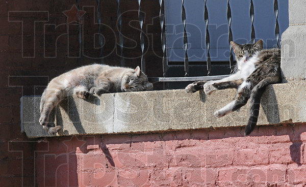 Cat nap: Two cats snooze on a porch in the 200 block of S. 9th Street Friday afternoon taking advantage of the late afternoon sun.